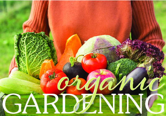 Growing Your Own Organic Garden