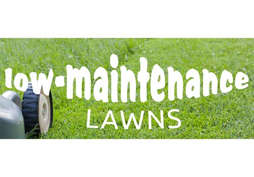Low-Maintenance Lawns